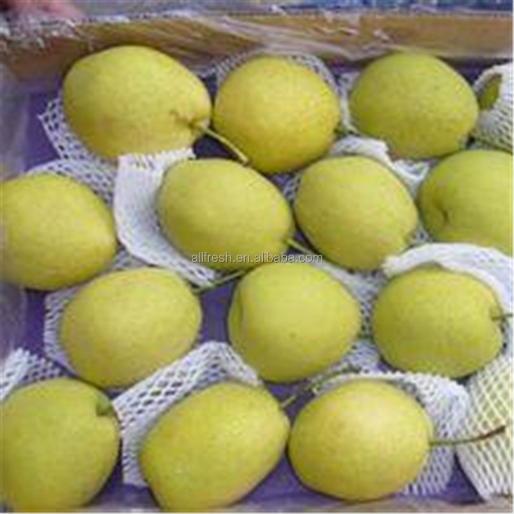 2016 New Crop fresh Shandong Pear