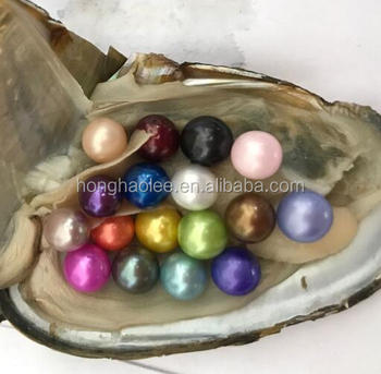 AAAAA vacuum packed oysters round pearl oysters twins pearls oysters 2 pearls in 1oyster stock natural colours dyed colors
