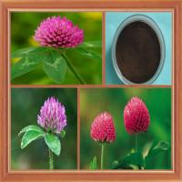Factory Supply pure natural Red clover Extract powder 2.5%-40% Total Isoflavones Test by HPLC