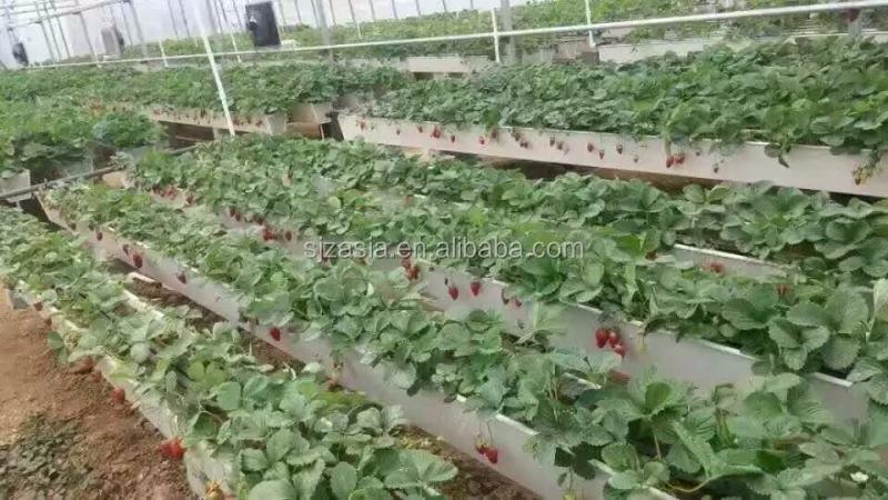 La culture hydroponique jardin vertical fraise l gumes for Jardin hydroponique