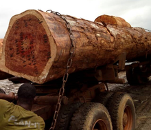 RUSSIAN Timber Log / Sawlogs /Wood round logs / lumber /PINE / SPRUCE