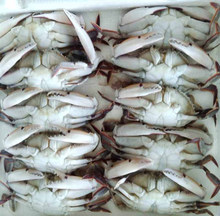 Frozen Blue Swimming Crab/ Cut Crab/Crab Meat