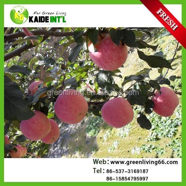 fresh kashmir apple fruit