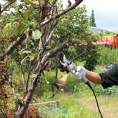 2016 nova árvore tesouras de poda elétricas made in Yongkang