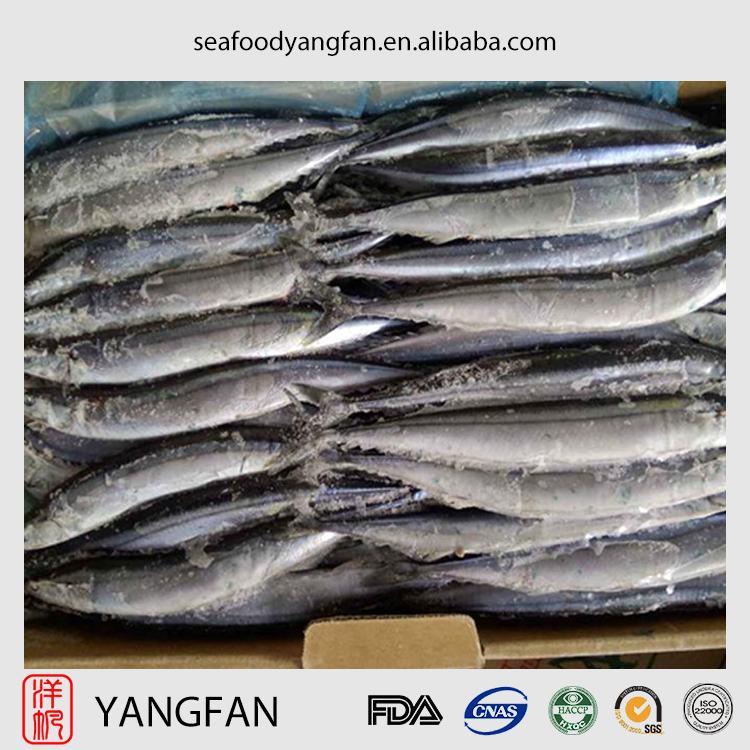 High quality frozen pacific saury with cololabis saira from China