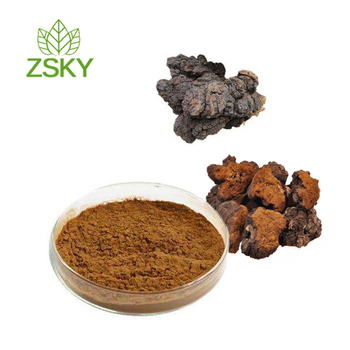 Super quality Chaga Mushroom Extract with 10%-40% Polysaccharides from GMP Supplier