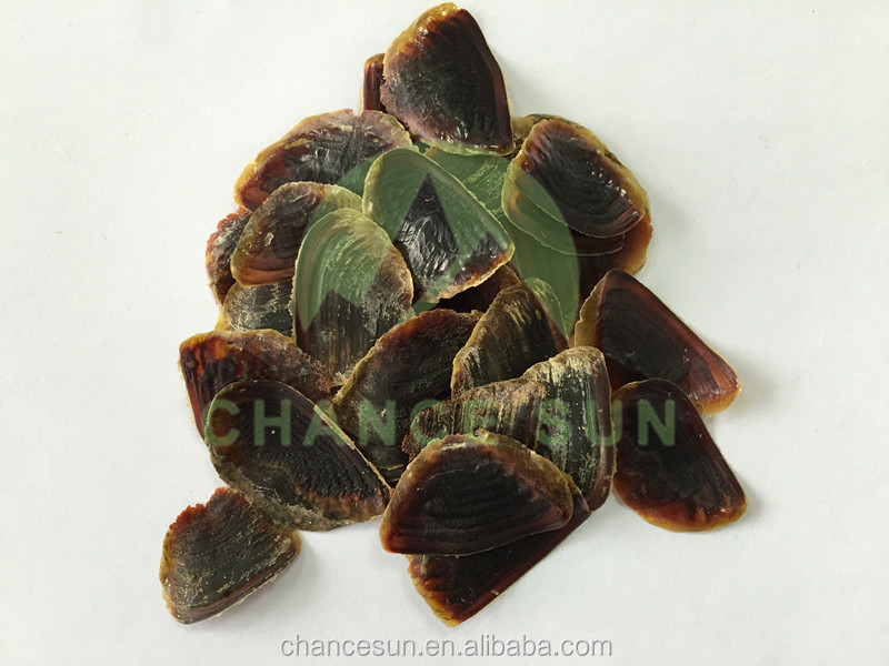 high quality raw sea shell sea oyster shells operculum