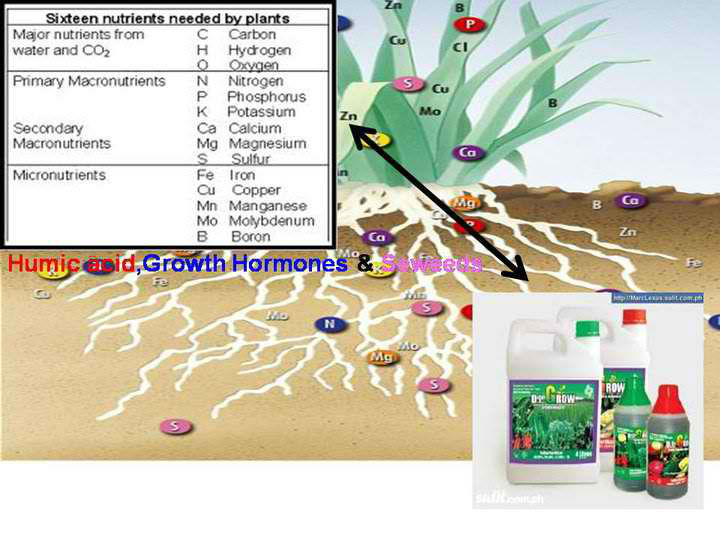 Power Grow Organic Fertilizer