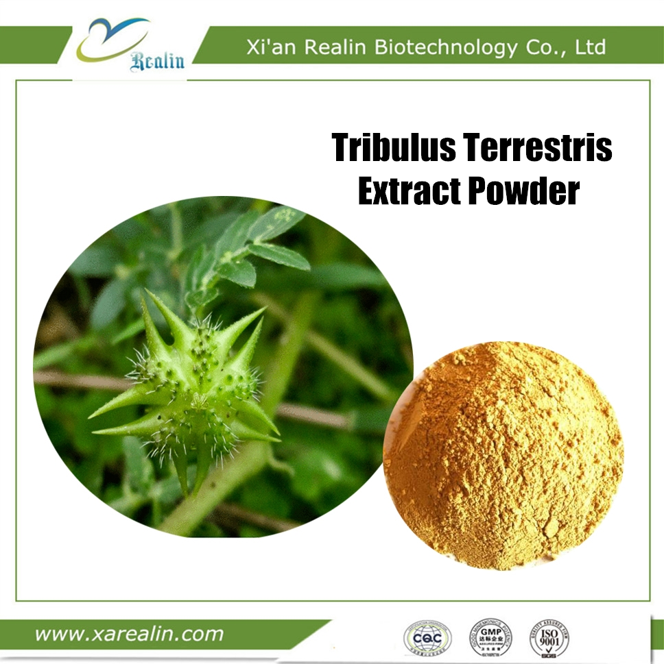 Herbal Sex Products for Penis Enlargement Tribulus Terrestris Extract Powder