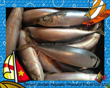 Frozen mackerel prices pacific mackerel frozen fish pacific mackerel