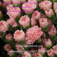 Multi-Colored Freshly Cut Carnations From Rainbow Floral Company With Bulk Value Shipped Whole Year