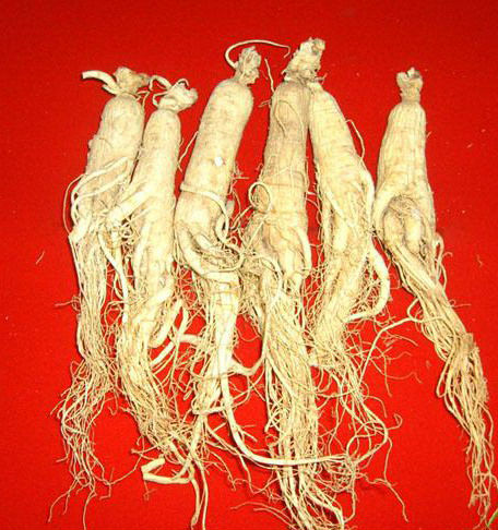 Best Selling White Panax Ginseng ,Natural Ginseng