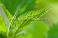 Hot sale! China wholesale high quality stinging nettle extract 4:1, 10:1, 20:1