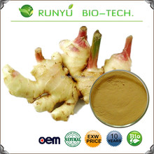 Free sample zingiber officinale extract gingerols ginger root extract 5% and 6-Shogaol