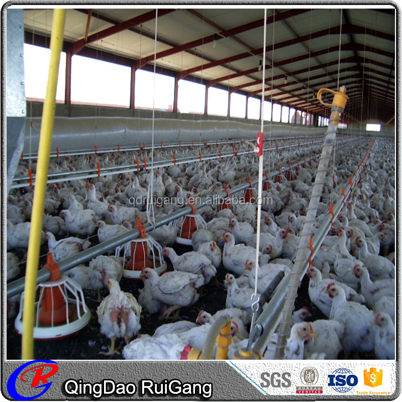 Low cost prefabricated structural steel poultry shed