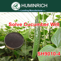 Huminrich Shenyang Use Potassium Humate Fulvic Acid Shiny Powder To Solve The Problem Of Cucumber Wilt