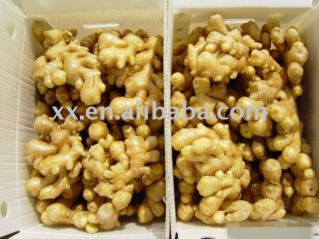 buy fresh ginger with good price