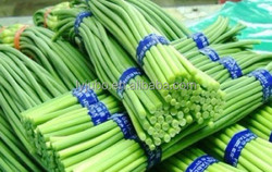 ew Crop frozen vegetables , IQF Frozen Garlic sprout/ shoot for sale , China products for overseas