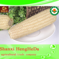 china supplier effectual yellow corn animal feed