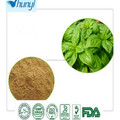 high quality Holy Basil Powder factory direct sale and good price