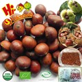 Wholesale frozen roasted chestnuts in shell for sale