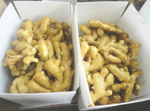 China wholesale Fresh wet ginger
