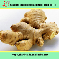 2015 hot sell china ginger price of fresh ginger