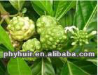 Natural ingredients High quality noni juice powder