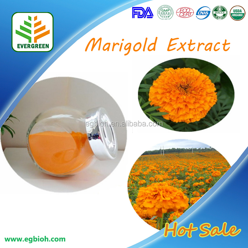 Marigold Extract/Parts of Marigold Flower/Marigold Plant Extract
