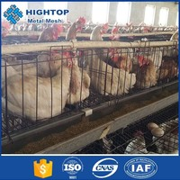 Design High Quality Automatic Equipment A Type Automatic Poultry Farm For Broiler