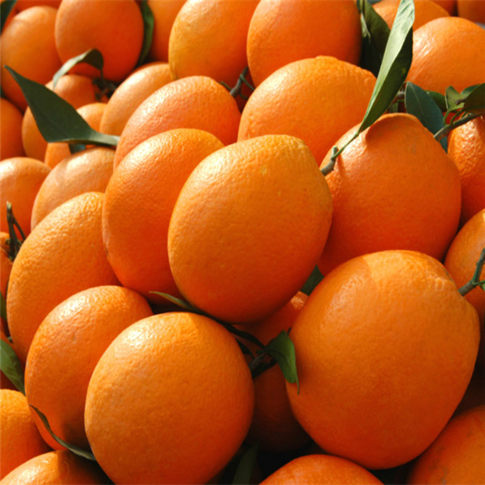 High quality chinese navel orange