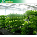 Commercial Hydroponics Trays for Multi Span Agricultural Greenhouses