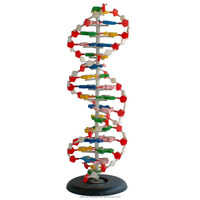 top quality DNA model for biological education
