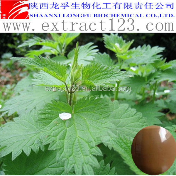 Factory supply nettle leaf extract powder