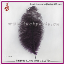 Leading supplier in China factory wholesale in large size ostrich feathers:35-40cm