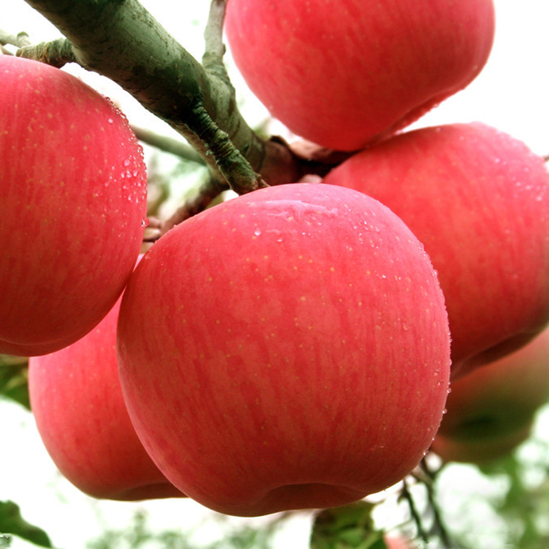 Fuji apples wholesale fruit prices