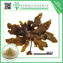 Anti-cancer product Laminaria Japonica extract Kombu Seaweed extract Fucoxanthin and Fucoidan