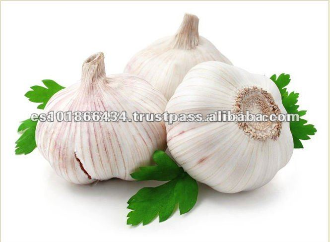 Best Quality and Cheap Price Normal Fresh White Garlic