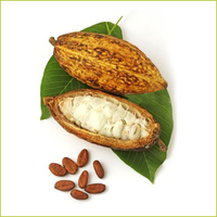 With Brand Name Bulk Cocoa Beans For Sale