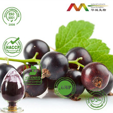NSF-GMP Supplier Anthocyanidins Black Currant Powder Black Currant Extract