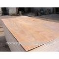 packing plywood with lower price