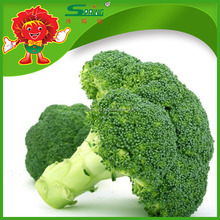 Export frozen fresh broccoli with good price