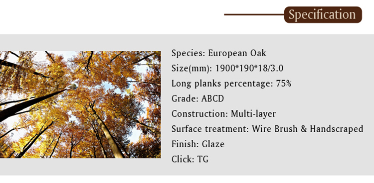 Glzae---European Oak.jpg