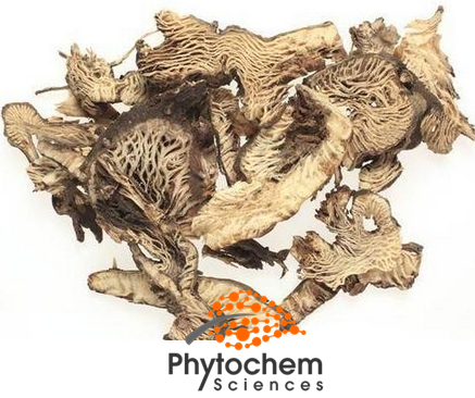 Brownish Yellow Herb extract black cohosh 5% Triterpene Glycosides
