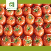 wholesale fresh vegetables fresh tomato with great price