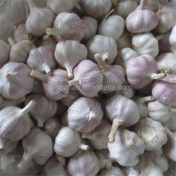 Fortune Star 5cm Fresh Garlic Natural Garlic Supplier