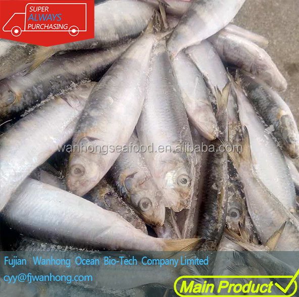 price frozen sardine sardine fish scientific name wholesale