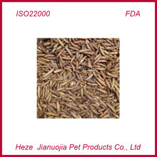 Fish Feed Black Soldier Fly Larvae