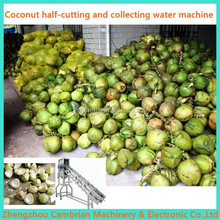 1000pieces/h coconut half cutting for water collection with lowest price