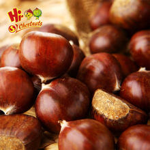wholesale hot quality china organic fresh chestnut